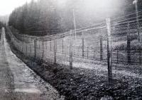 Uzavřené hraniční pásmo na fotografii H.Babora (Prášilsko)