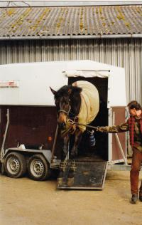 Při převozu koní